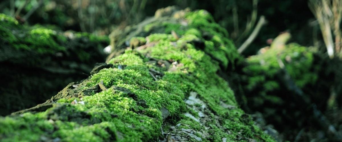landscapes_moss500