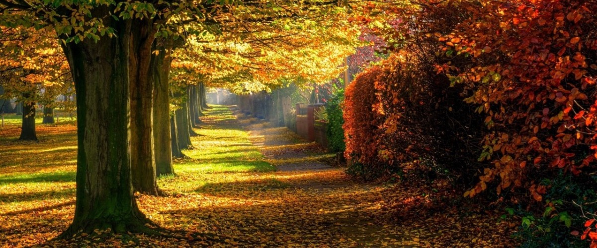 leaves_park_trees_forest_colorful_path_nature_autumn_road_2048x1360 (1)